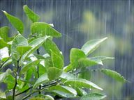 梅雨の葉っぱ_R
