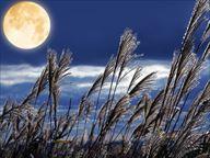 十五夜 満月とススキの風景1_R